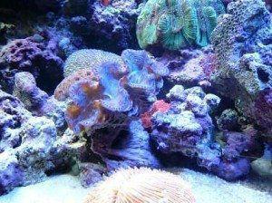 Underwater Coral Great Barrier Reef