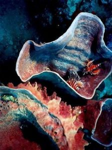 Andaman Sea Mushroom Coral www.njcharters.com