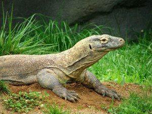 Komodo Dragon www.njcharters.com