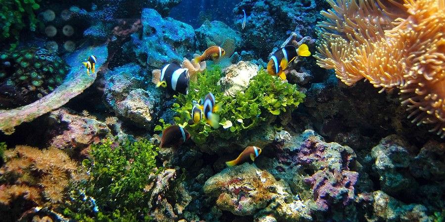 See the Underwater Wonders of Fiji while Snorkeling www.njcharters.com