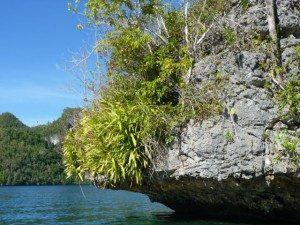 Raja Ampat Wild Orchids www.njcharters.com