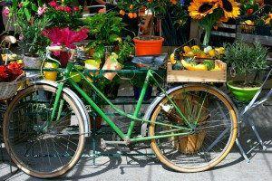 Antibes Market www.njcharters.com