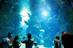 Monaco Oceanographic Museum Aquarium www.njcharters.com