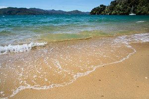 Beach in the Marlborough Sounds