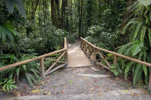 Wooden walkway in the rain forest in Dominica, Caribbean island
