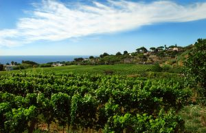 vineyards, Italy, luxury yacht charter
