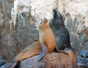 Sea Lions in La Paz Mexico -