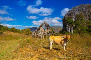 Famous Cuba farmland
