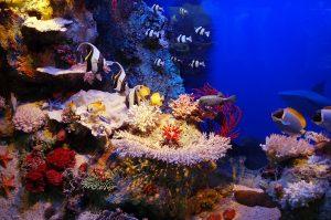 Fiji, snorkeling, yacht charter