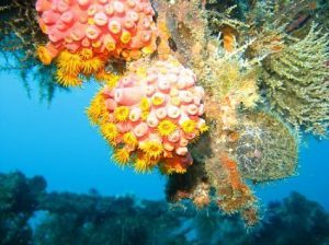 Underwater coral, asia, luxury yacht charter, scuba diving