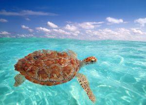 Caribbean, Luxury Yacht Charter