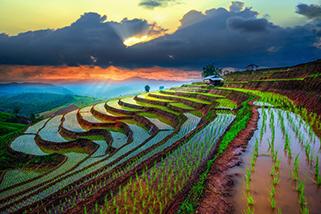 Thailand Rice paddies Mae-Jam Village www.njcharters.com