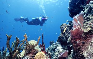 Canoan Scuba Diving on Reef