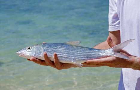 The Elusive Bonefish Anegada Island njcharters.com