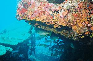 Wreck of The Rhone Salt Island njcharters.com