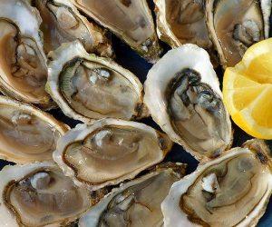 Croatian Oysters