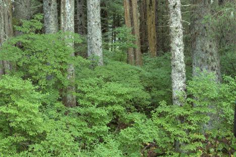 Baranof Island Forests njcharters.com