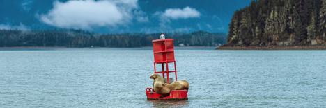 Sea Lions on a Juneau Harbor Buoy njcharters.com