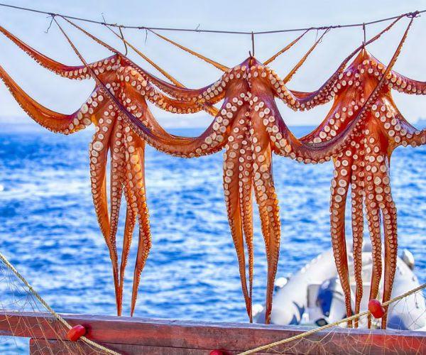 Greece Island Taverna Octopus Drying in the Sun www.njcharters.com