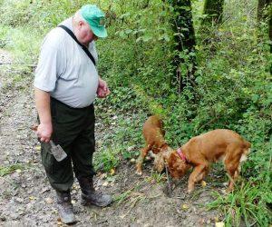 Croatia Istria Motovun Forest Truffle Hunter with Turffle Hunting Dogs