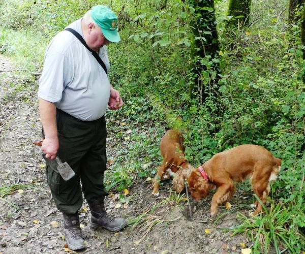 Croatia Istria Motovun Forest Truffle Hunter with Turffle Hunting Dogs