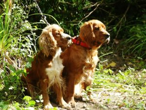 Croatia, Motovun Forest Trained Truffle Hunting Dogs www.njcharters.com