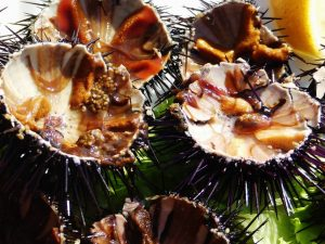 fresh sea urchin in croatia close up www.njcharters.com