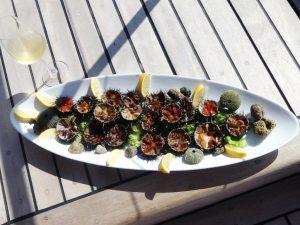 fresh sea urchin in croatia www.njcharters.com