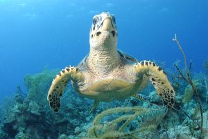 Warderick Wells Underwater Exuma Land and Sea Park Bahamas yacht charter