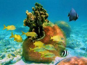 Great Exuma Island Coral Reef