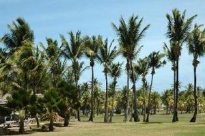 Palms on Palm Island