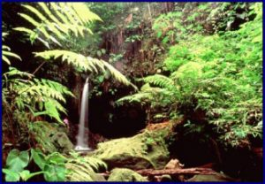 Mount Pierre's rain forest Martinique