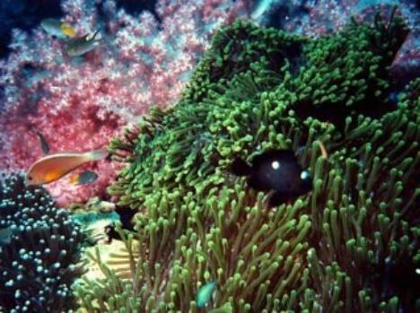 Underwater life, Misool