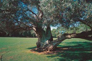 Brijuni National Park Croatia njcharters.com