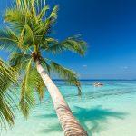 Bahamas Beach and Palm Tree