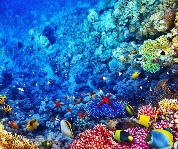 Australia Great Barrier Reef www.njcharters.com