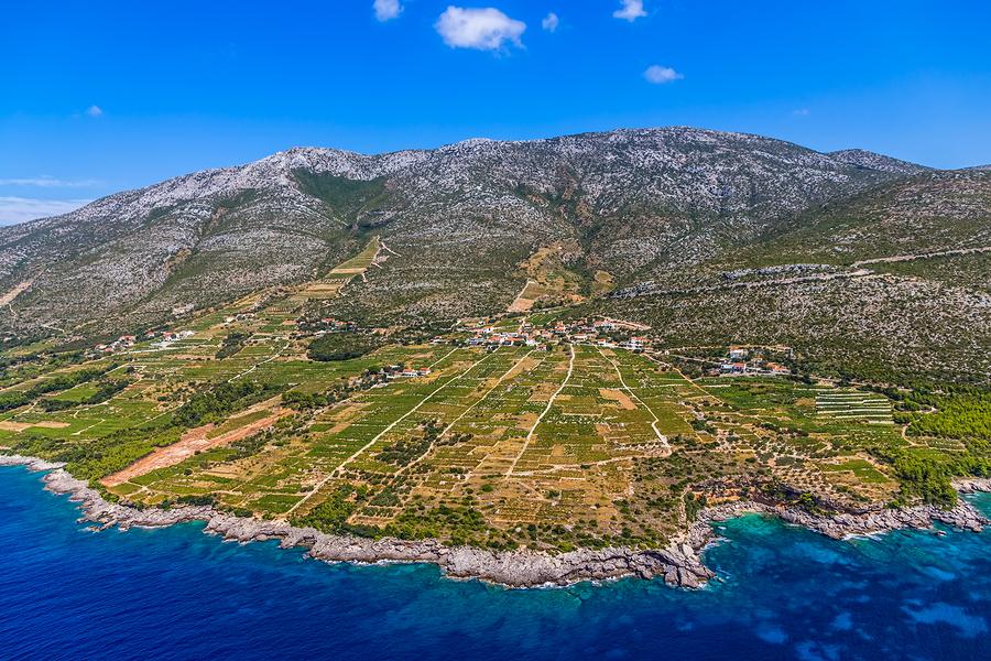 Famous Croatian vineyards with Dingac grapes