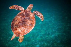 Sea Turtle Caribbean Yacht Charter njcharters.com